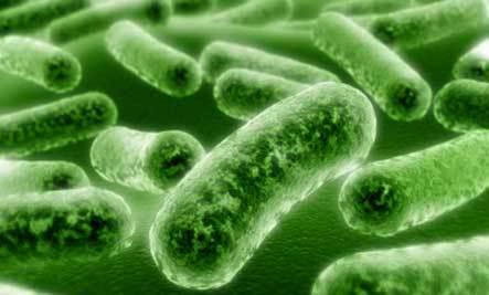 Bakteri Listeria