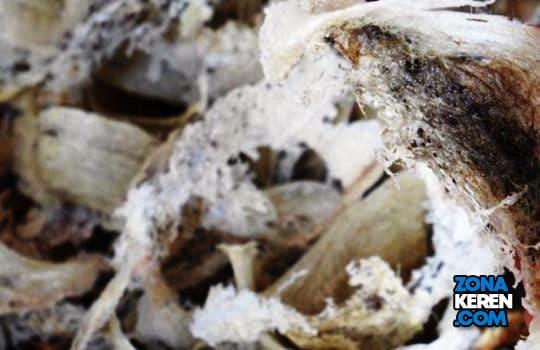 Update Harga Sarang Walet Terbaru per Kg Segitiga dan Mangkok Premium