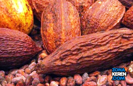 Harga Biji Kakao Kering per Kg Terbaru April 2021