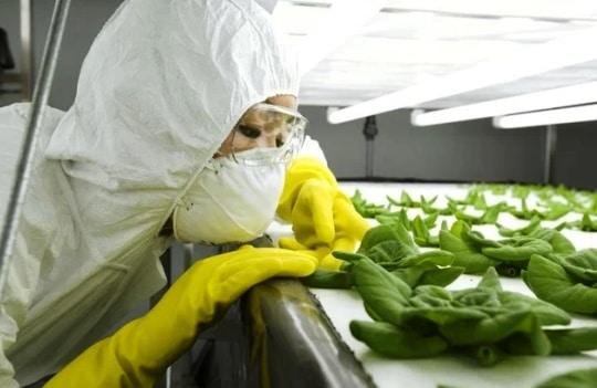 Pengertian Bioteknologi Konvensional Contoh Produk Dampak Positif Negatif
