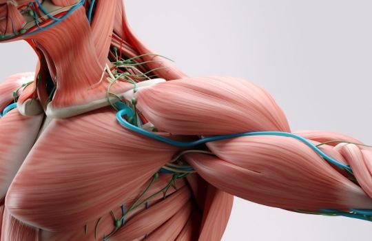 Ketahui Pentingnya Mekanisme Kontraksi Otot pada Tubuh Manusia